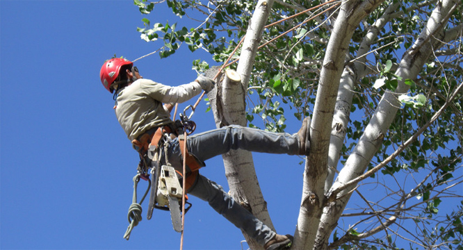 Questions to Ask When Hiring a Tree Service Company