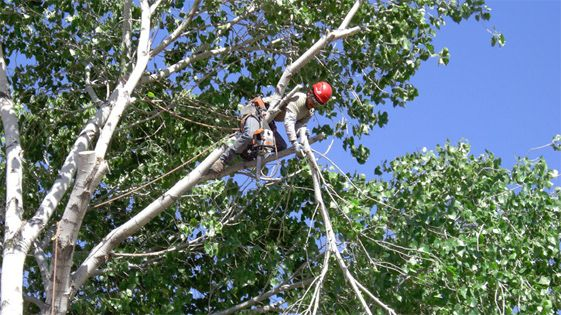 tree-trimming-company-colleyville-grapevine-bedford-hurst-euless
