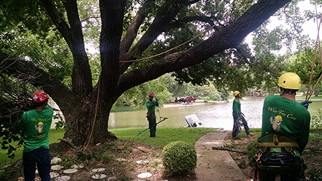 wisetreecare-about-us-bedford-tx